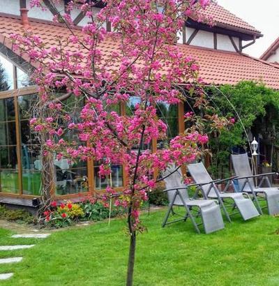 wyjatkowy dom w ogrodzie