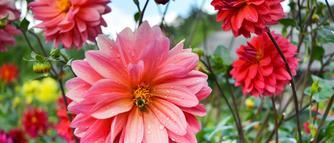 Rośliny miododajne do ogrodu: uprawa i zastosowanie rośliny, które lubią pszczoły