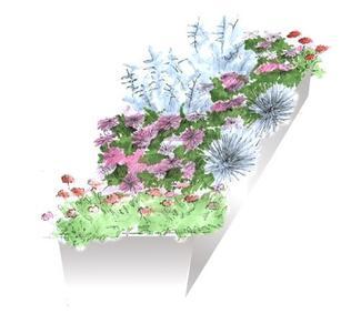 Rośliny na słoneczny taras