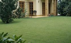 Zakładanie trawnika: jaką mieszankę nasion traw i darń wybrać na trawnik